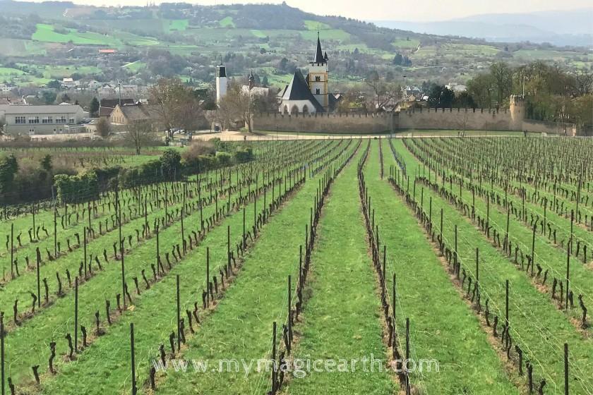 Hiking in the vineyard; Rhine river, hiking trail