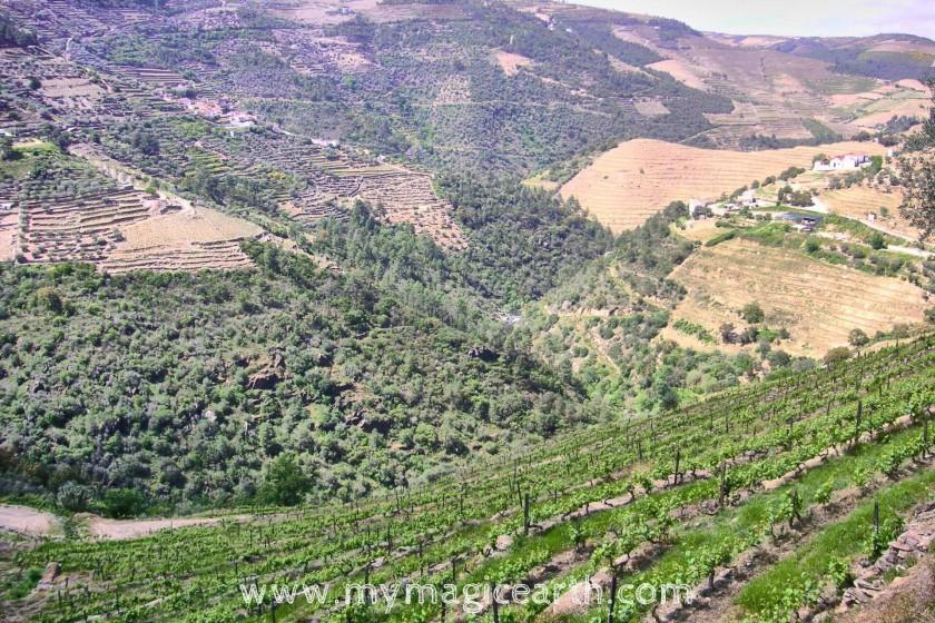 Terraced vineyards in Pinhão, Portugal