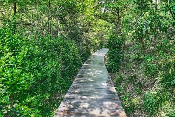 Wooden Boardwalk in West Sheshan, Songjiang, Shanghai