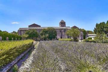 The field behind the Monastery Saint-Paul de Mausole