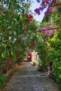 Rue Bellevue, one of Collioure's prettiest flower-filled streets