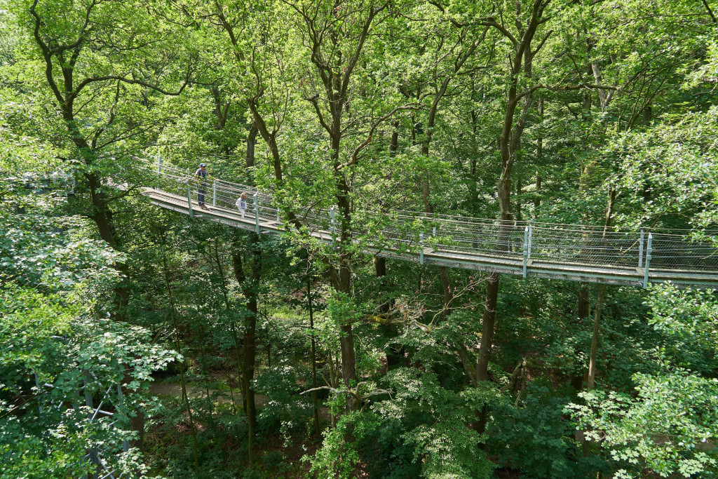 Swing bridge along the treetop trail in Bad Harzburg, Germany